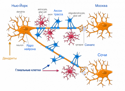 Exercise-promotes-plasticity-across-neurons-glial-cells-and-synapses.png